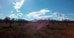 80 hectares à Zriba