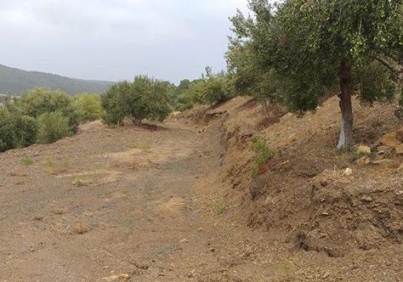 Cherchell,à vendre terrain gricole de 03 hectares (30000 m²),comprenant 400 oliviers,différents arbres fruitiers,30 ruches d'abeilles,puits et une rivière.
