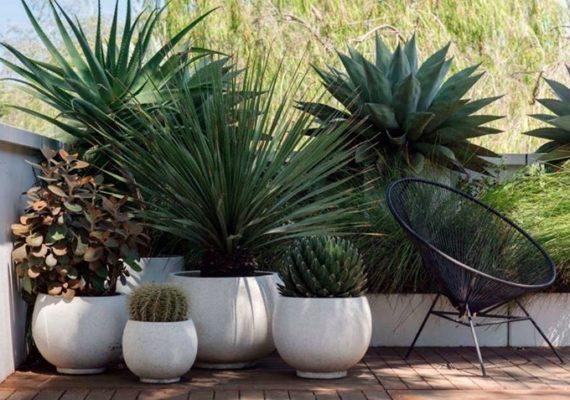 A l' #intérieur comme à l'#extérieur, quand on vis dans un #appartement il n'est pas forcement facile d'avoir un peut de #végétation autour de soi. Alors nous est venue notre #IdéeDéco de la semaine. Et si nous lancions plusieurs espèce de #plantes dans des #pots de différentes tailles, #couleurs et #matières.