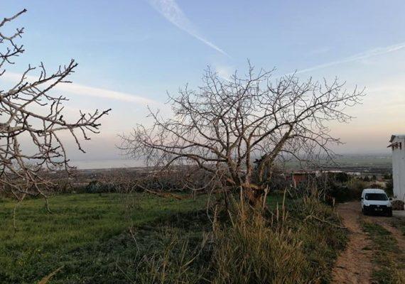 On vous offre un sublime terrain agricole d'une superficie de 3200 m2 clôturé de 150 arbres d'olive frigivinto