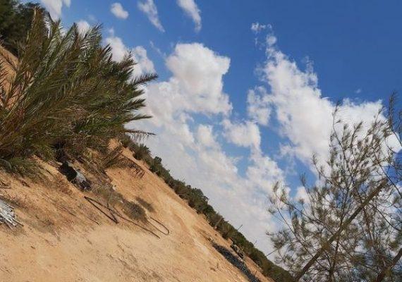 مزرعة للبيع بمنطقة الظهير خلف شيل اطبيقة تبعد عن الطريق المعبد 3 مزرعة اي بمسافة 600 متر مساحة المزرعة 5 هكتار بقرب منها منطقة سكنية تحتوي المزرعة على ( 2 هناقر اصغار (مبني ) + استارحة (غرفتين نوم + حمام + مطبخ ) + بير مياه الجوفية + خزان للمياه + منظومة ري + كهرباء واصل للمزرعة + أشجار مثمره زيتون ونخيل وغيرها من الاشجار )