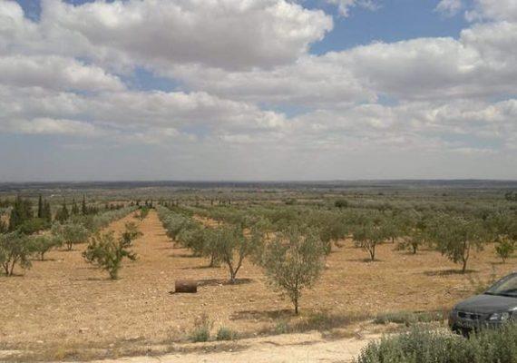 A vendre ferme 🌳de 4,5 hectares avec :