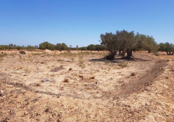 2350 m² a vendre à Ghizen, Djerba