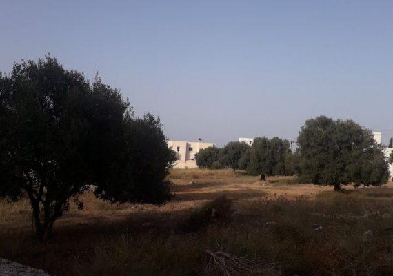 Vente a Chott Meriam un terrain de 692 m² a 420 dt / m² , a proximité de Ksour Ghornata