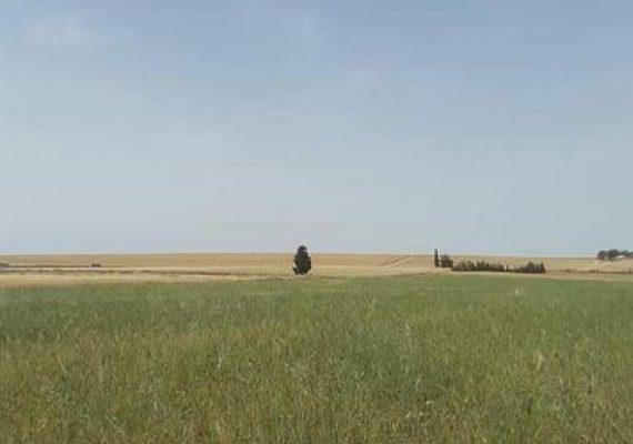 #Je Vous Propose ce terrain agricole de 7 hectare a cidi Medienne💈💈💈💈💈💈💈